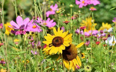 Projekt Insektenweide startet in Kürze