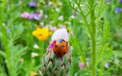 Aktuelles von der Insektenweide