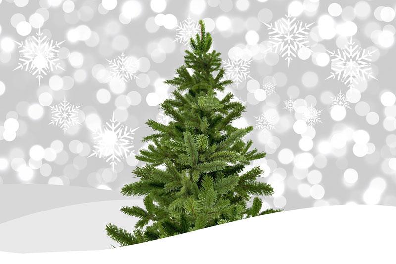 Auch in diesem Jahr… Großer Weihnachtsbaumverkauf